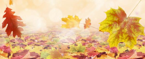 Blätter eignen sich wunderbar zum Basteln von Laternen