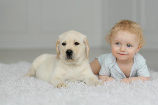 Babys und Haustiere profitieren voneinander