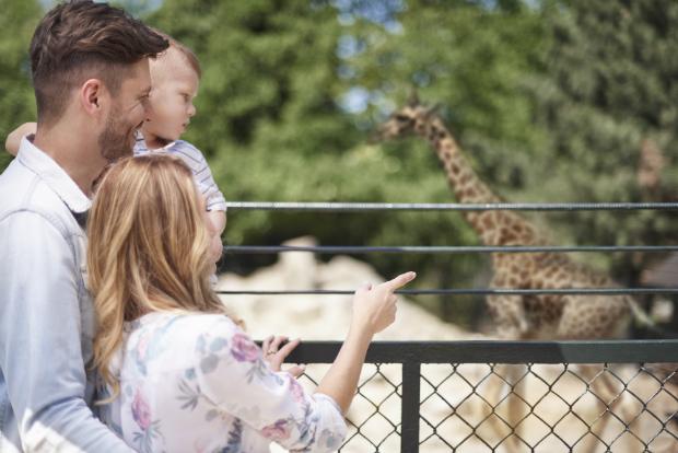 Kinder lieben Tiere im Zoo